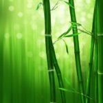 La fougère et le bambou: conte oriental sur la résilience